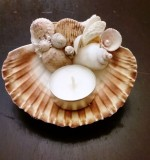 Sea Shells Hand Craft Created By Anastassiya Posted By The Hobby Room