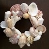 Sea Shells Wall Decor