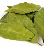 Laurel Bay Leaves Created By  Posted By MounetBaytJedee