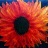 Big Sun Flower Created By Guy Sebbag Posted By Maher & Valentino