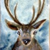 Stag Created By Kay Dawson Posted By Maher & Valentino