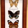 Butterflies Created By Bissan Gallery Posted By Bissan Gallery