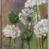 Queen Anne's Lace 1.0 Created By Dana Bustami Posted By Dana Bustami
