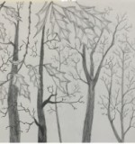 WOODS Created By Hala Mukhtar Posted By Hala Emad Mukhtar