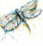 Dragonfly Created By Anika Rastogi Posted By Anika Rastogi