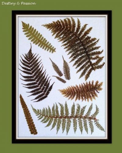 Decoupage on canvas with leaves of ferns Created By  Posted By Destiny And Passion