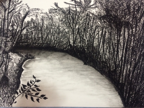 The Rainforest Created By Waqas Ahmed Posted By Waqas Ahmed