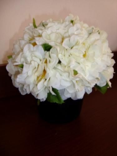 White Carnations Created By Leigh Tatli Posted By Leilani Tatli